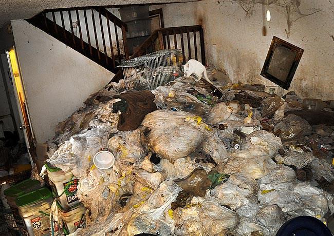 animal hoarding cleanup Milwaukee | animal hoarding cleanup Green Bay | animal hoarding cleanup Wisconsin | animal hoarding cleanup near me
